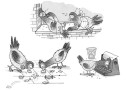 Pigeons eating typing lauging DEMPSEY -