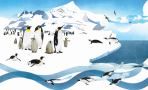 Penguins NATSKO SEKI -