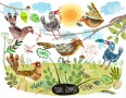 Birds in Sunshine YUVAL ZOMMER -