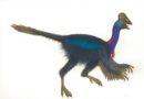 Bird Dino Peter Malone -