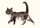 DIECKMANN, Sandra, Black and white Cat -