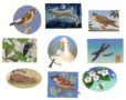 Nature Misc. PETER MALONE -