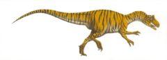 Tiger Dino scan Peter Malone -
