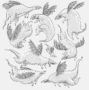 Dragons -